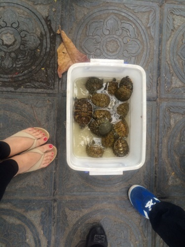 Turtles sold in markets and supermarkets. NOT as pets, but as dinner on your table!