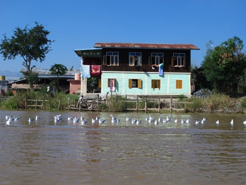 Seagulls of Inle Lake